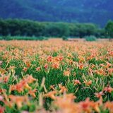 全教總協商 民進黨:教師退休起支年齡下降至58歲