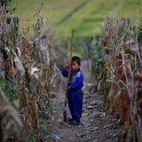 颱風尼莎海棠夾擊  菜價下週漲跌難推估