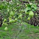 【國民黨工之怒】嘉義市黨部遭查封 因他們拿不到離職金